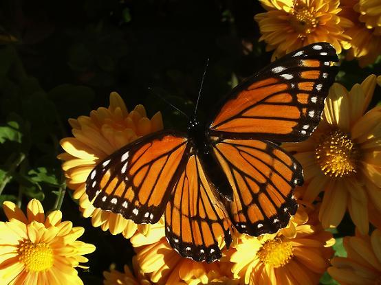 Пеперуда през есента